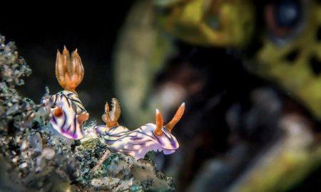 برندگان مسابقهی عکاسی زیر آب سال 2018