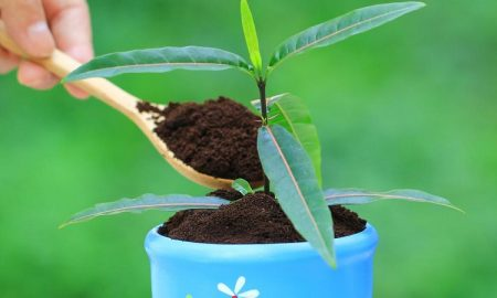هرکاری می کنید، فقط قهوه ی آسیاب شده ی خود را در باغچه نریزید!