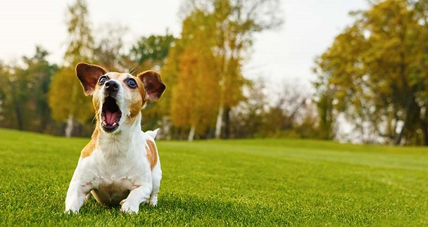 اضطراب جدایی از صاحب در بسیاری از سگها وجود دارد و شایع ترین علامتهای آن به هم ریختن خانه یا آپارتمان، پارس کردن و تولید سرو صدا و پارس کردن است.