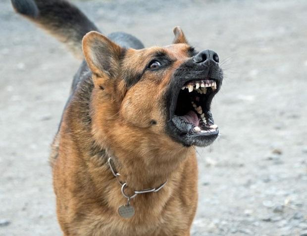 بهترین راه برای متوقف کردن صدای پارس سگ این است که فرمان ساکت شدن را به او بیاموزید. این آموزش مانند دیگر آموزشها ممکن است وقت گیر باشد و نیاز به صبر و شکیبایی زیادی داشته باشد.