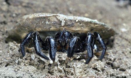 قدیمی ترین عنکبوت ثبت شده در دنیا