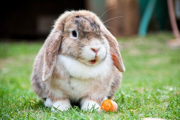 اسباب بازیهای منطقی برای بازی با خرگوش کنجکاو عالی هستند و می توانید آنها را از فروشگاههای حیوانات خانگی تهیه کنید.