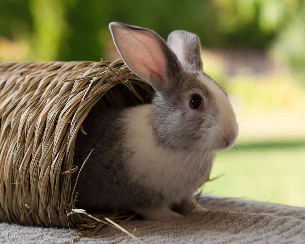 اگر خرگوشتان به حفاری علاقه دارد، در حالی که شما بیرون از خانه هستید، میتوانید مقداری خاک اره یا کاه در قفسش بریزید تا زمانی که بی حوصله میشود مشغول حفاری شود.