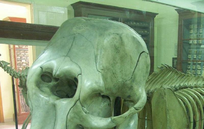 فسیل های عجیب و واقعی
