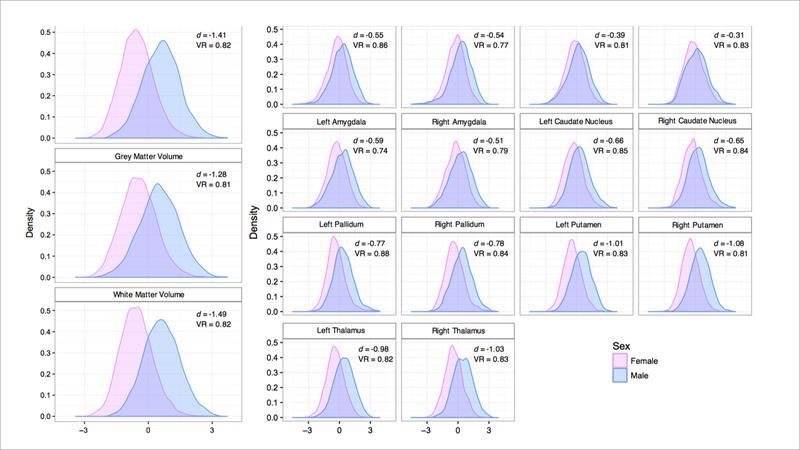 تفاوت امواج مغزی زنان و مردان