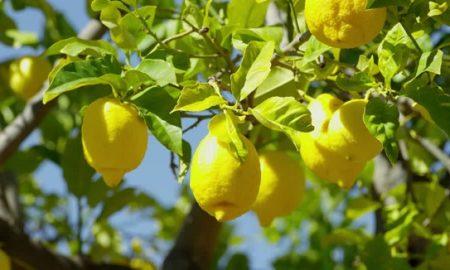 خواص لیمو: همه جوره روی لیموترش حساب باز کنید!