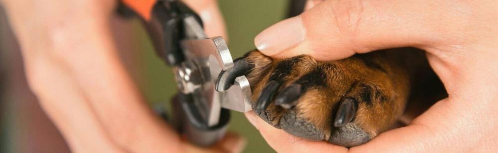 ناخن سگ: چگونه ناخن سگ را کوتاه و مرتب کنیم؟