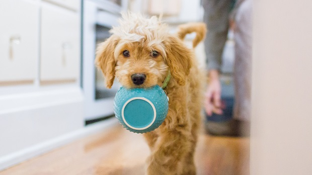 غذای سگ زمانی که در خانه تهیه میشود میتواند برای چندین وعده استفاده شود. حتی یک مدل غذا را میتوان دو یا سه مرتبه در هفته تکرار شده و رژیم غذایی سگ را تکمیل کند.