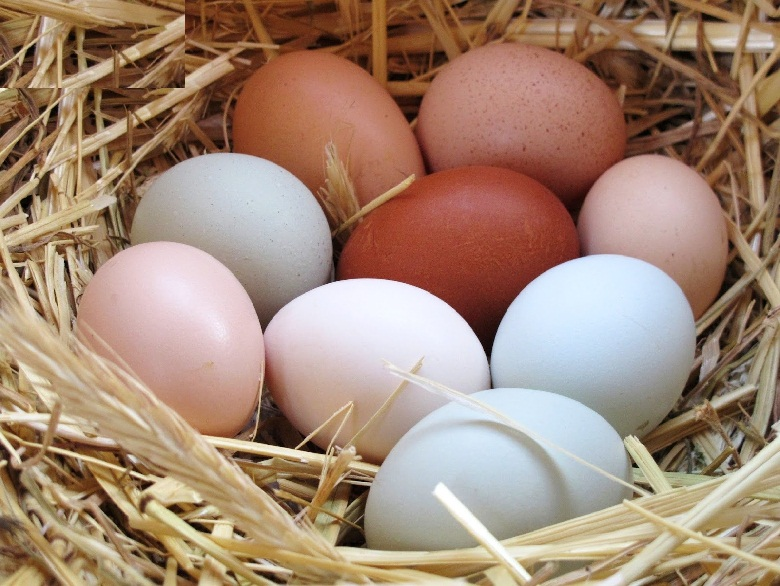 تخم مرغ خواص بسیاری دارد ولی در صورتی که در مصرف آن حد تعادل رعایت نشود ممکن است منجر به اختلالاتی در زمینه قلب و عروق شود