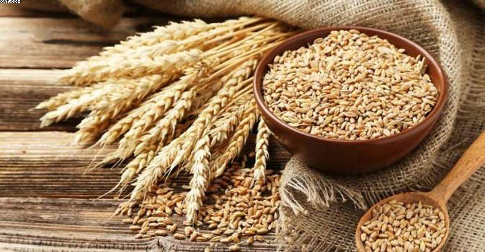 جوانه گندم نخستین ماده تشکیل دهنده سوهان قم است که سرشار از ویتامینها و مواد معدنی و املاح میباشد.