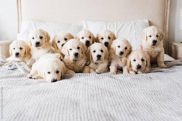 بنابراین اگر ناچارید که آن را در خانه و آپارتمان نگهداری کنید نگران نباشید که به راحتی میتوانند خود را با وضعیت به وجود آمده تطابق دهند. این سگها دست و پا چلفتی و تنبل نیستند و اعتماد به نفس بالایی دارند. با تمرینات زیاد میتوانند به عنوان سگ شکار به کار گرفته شوند.