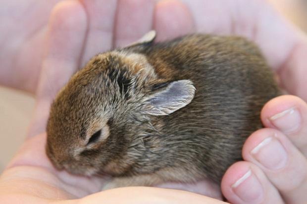 همه خرگوشها از تجربه شستشو لذت نمیبرند به همین دلیل میبایست برخی از آنها را با برس تمیز نگه داشت. یک برس مخصوص این کار تهیه کرده و چند روز یک مرتبه به آرامی موهای بدن خرگوش را شانه بزنید. پس از استفاده از برس نیز آن را به خوبی شسته و خشک نگه دارید.