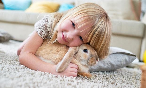 نگهداری خرگوش برای افرادی که در سن نوجوانی یا بیشتر هستند مناسب تر است. اگر فرزندی کوچک تر از این سن دارید بهتر است که خرگوش خانگی نداشته باشید.