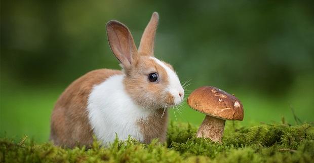 خرگوشها موجوداتی بازیگوش در عین حال بسیار باهوش هستند. آنها علاوه بر این که نیاز به ورزش فیزیکی دارند بسیار دوست دارند که بازیهای پیچیده ذهنی هم انجام دهند.