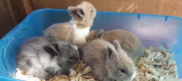 برای نگهداری از نوزادان تازه متولد شده خرگوش میبایست یک جعبه تهیه کنید و گرمای ثابتی را برایش در نظر بگیرید.