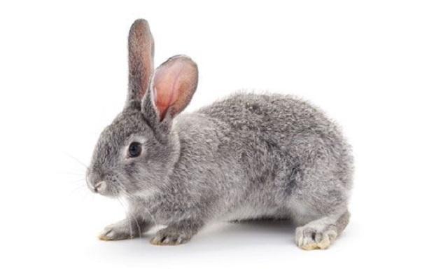 سعی کنید پس از استحمام خرگوش را با حوله کاغذی یا حولههای پنبهای لطیف خشک کنید. در صورت امکان میتوانید با استفاده از باد ملایم و نه چندان گرم سشوار موهای بدن این حیوان را کاملا خشک کنید.