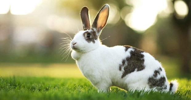 آب تازه یکی از گزینههای مهم در نگهداری خرگوش است. همیشه آب را در ظرفی نزدیک به خرگوش قرار دهید. در مواقع گرما میتوانید یک یا دو حبه یخ نیز در آب خوراکی بیندازید. مطمئن شوید که خرگوش شما به اندازه کافی آب مینوشد. در صورتی که آب نخورد ظرف آب را در نزدیکی خوراک روزانه و یا سبزیجات بگذارید.