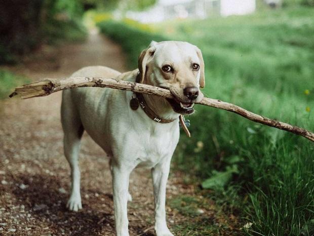 در لیست باهوش ترین نژاد سگ به طور کلی تمامی نژادهای سگ در طبقه بندی سگهای باهوش بر اساس میزان اطاعت و سرعت در یادگیری به چند رده طبقه بندی میشوند.