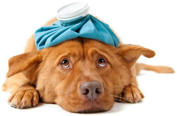 خوابیدن بیش از حد، اختلال در خوردن غذا و مشکلاتی در راه رفتن و بازی کردن برخی از علائم بیماری های مختلف در سگها هستند.