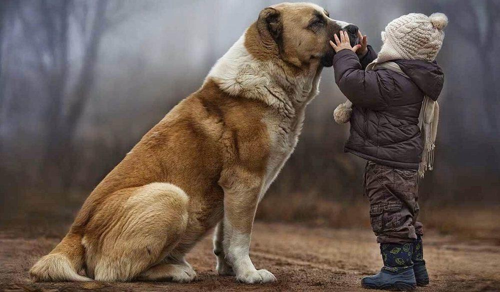 وفادارترین نژاد سگ