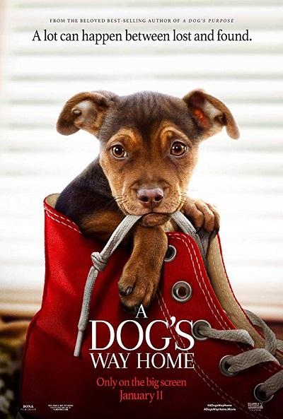 پوستر فیلم A Dog's Way Home مسیر بازگشت یک سگ به خانه