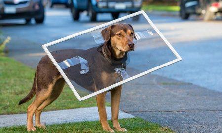 فیلم A Dog's Way Home مسیر بازگشت یک سگ به خانه