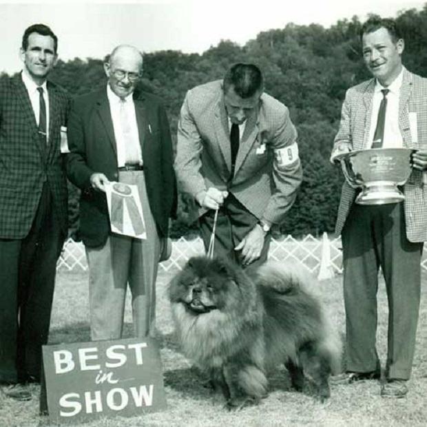 """برای نخستین مرتبه سگ چاوچاو در دهه ۱۸۲۰ در باغ وحش لندن به نام """" سگ وحشی چینی """" به نمایش گذاشته شده است"""