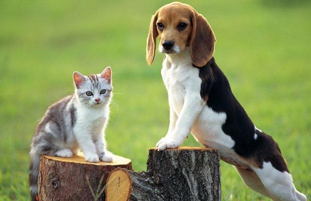 سگ بیگل به خاک بازی علاقه زیادی دارد که این یک وجه مثبت برای صاحبان Beagle به شمار میرود. به این معنا که خاک بازی سبب میشود این سگ نیاز کمتری به استحمام داشته باشد.