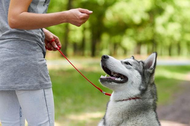 معمولا سگ هایی که با دست و یا دهان خود اسباب بازیهای مختلف را جابه جا میکنند و با آنها بازی میکنند، سگهای کم خطر تر و یا بی خطر هستند.