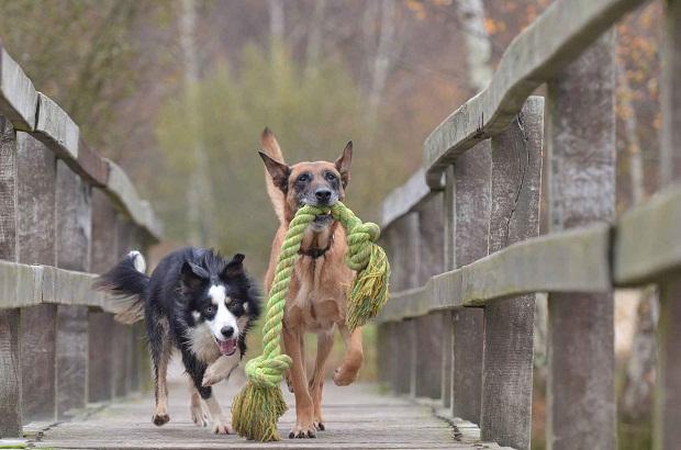 """دستورات بسیاری هست که میتوان برای بازی سگ به کار برد. بنشین، بمان، دراز بکش، دست بده و . . . از جمله دستوراتی هستند که همگی به یک روش اجرا میشوند. یکی از پر کاربرد ترین دستورات که در زمینه تربیت سگ نیز موثر است دستور """" بنشین """" است."""