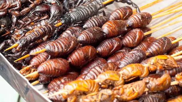 در بیشتر فرهنگهای غرب انواع سوسکها به عنوان یک آفت به شمار میروند و پذیرفتن آن به عنوان یک ماده غذایی کمی دور از باور است.