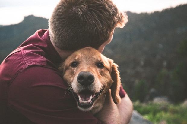تحقیقات نشان داده است که سطح اکسی توسین در روند وفاداری سگ تاثیر میگذارد. در واقع این هورمون بر روی روابط اجتماعی تاثیر زیادی دارد