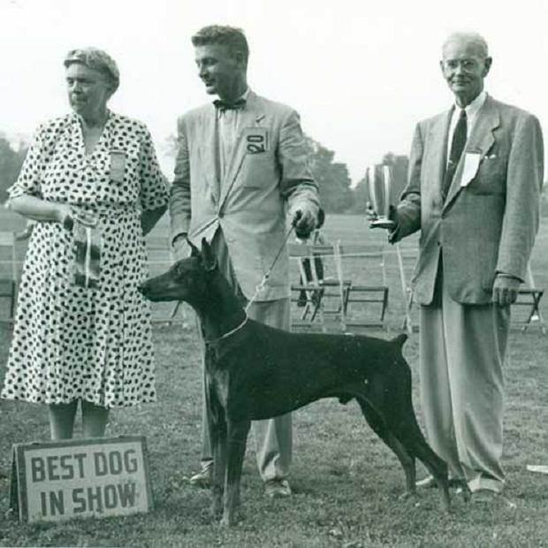 در ابتدا سگهای این نژاد را Doberman Pinscher صدا میزدند اما بعدها به Doberman کوتاه و ساده شد.