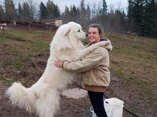 از دیگر نژادهای سگ که به وفاداری شهرت دارند نژاد Great Pyrenees است.