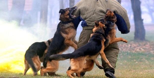 یکی از مشکلاتی که در سبک زندگی این سگ مشاهده میشود این است که در صورت عدم آموزش میتواند کمی پرخاشگر و وحشتناک باشد.