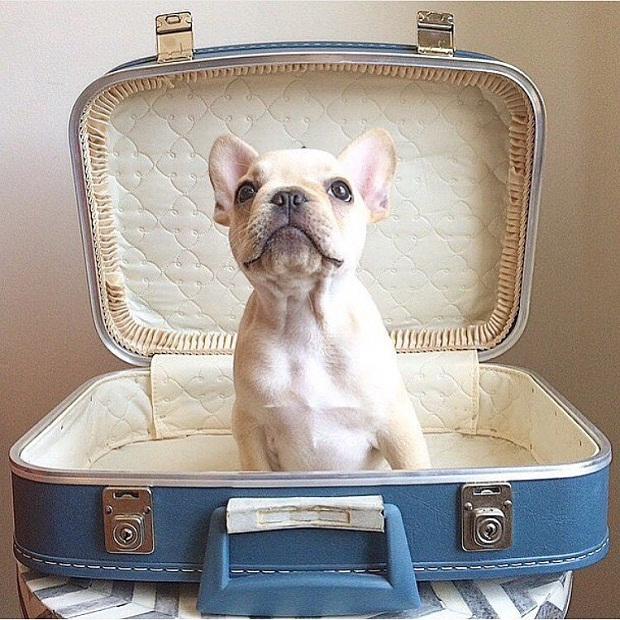 انتخاب سگهایی که جثه کوچکی دارند برای نگهداری سگ بسیار مناسب تر است. این سگها را به راحتی میتوانید در آپارتمان نگهداری کنید و نگران مسئله جای خواب و خوراک آنها هم نباشید.