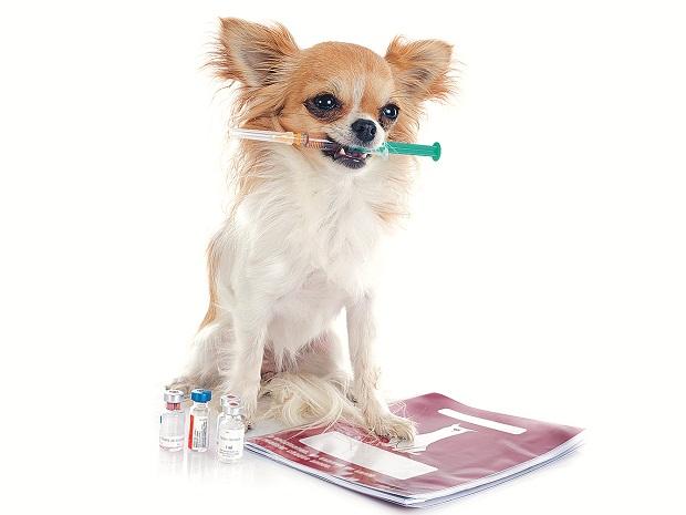 به طور کلی واکسیناسیون سگها بر اساس انجم حیوانات امریکایی ( AAHA) انجام میگیرد