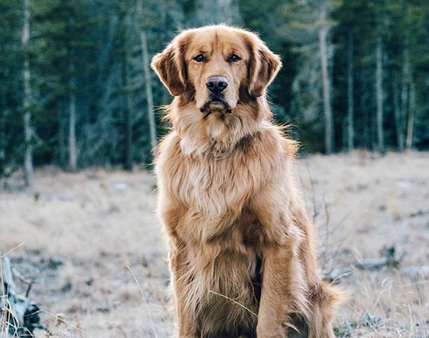این نژاد سگ در طول روز حتما میبایست بازی و فعالیت بدنی کافی داشته باشد. برای بازی کردن با آن وقت بگذارید و زمانی را برای یک پیاده روی کامل با او در نظر بگیرید. پیاده روی، دوچرخه سواری و همچنین بازیهای تعقیب و گریز بهترین فعالیت بدنی این سگ به حساب میآیند.