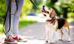 مشکلات تربیت سگ در ایران و راه حل آنها